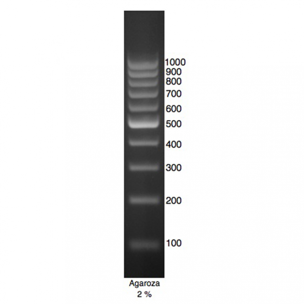 DNA Marker 1