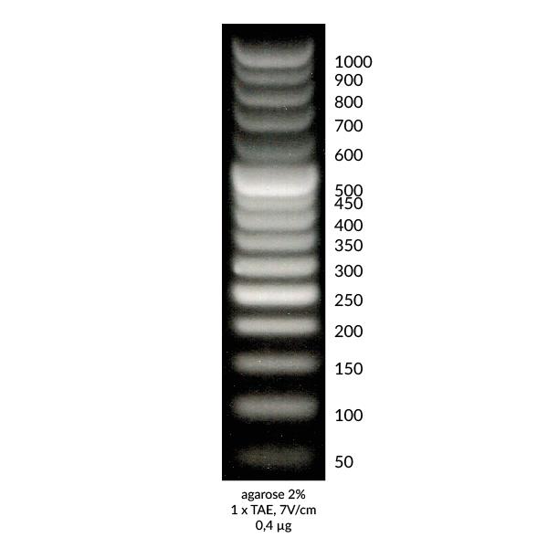 DNA Marker 2+