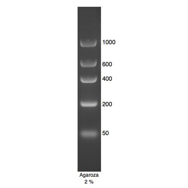 DNA Marker 2