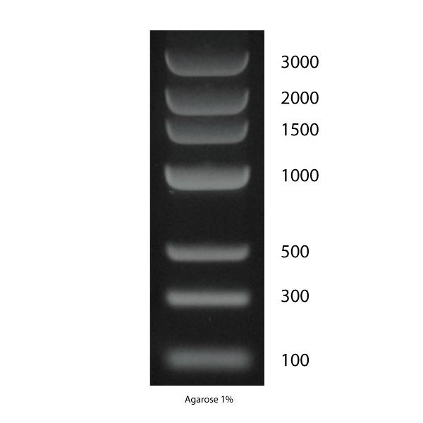 DNA Marker 3