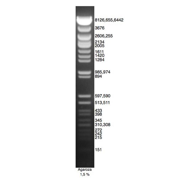 DNA Marker Lambda/Ava II