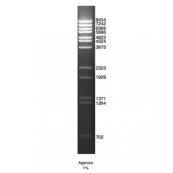 DNA Marker Lambda/BstE II