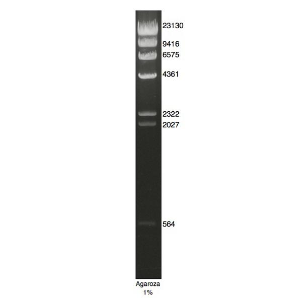 DNA Marker Lambda/Hind III