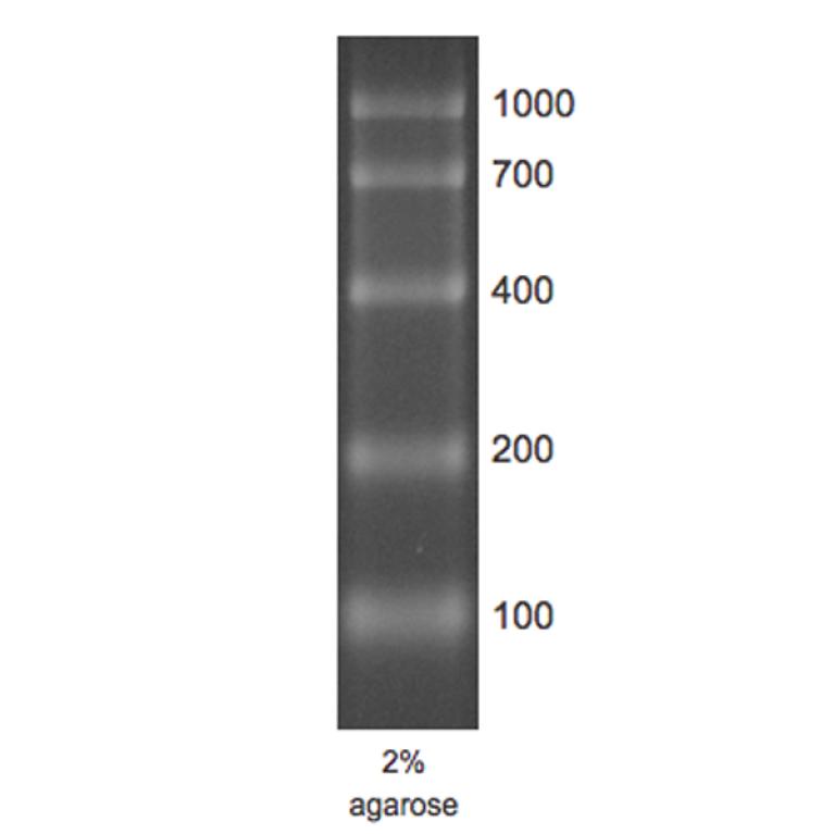 RNA Marker 1 RTU